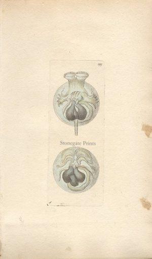 Circular Vorticella