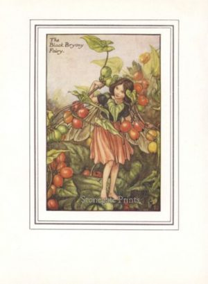 The Black Bryony Fairy