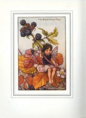 The Blackberry Fairy