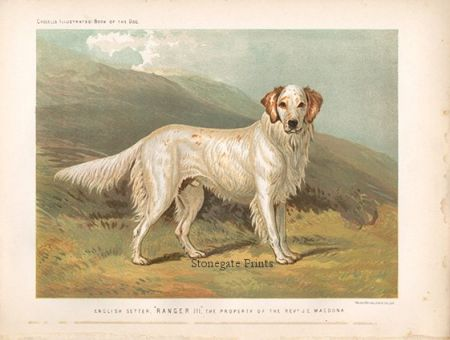 V. Shaw, English Setter, Book of the Dog