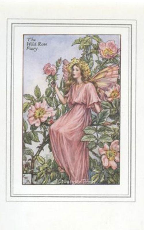 C.M. Barker, Wild Rose Fairy